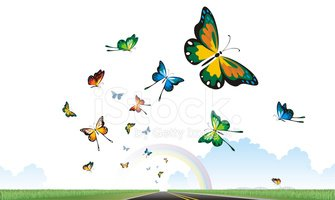 Butterfly - Insect,Rainbow,...