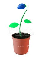 Potted Plant,Plant,Isolated...
