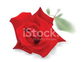 Rose - Flower,Red,Love,Isol...