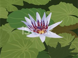 Water Lily,Lily,Pond,Water,...