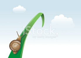 Snail,Effort,Slow,Insect,At...