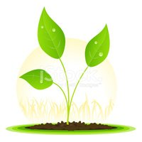 Seedling,May,Growth,Plant,W...