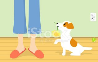Jack Russell Terrier,Mother...