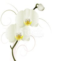 Orchid,Nature,Single Flower...