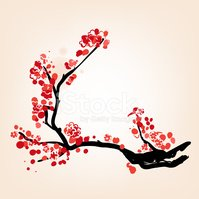 Oriental style blossom in spring