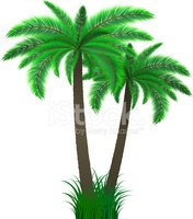 Tree,Palm Tree,Tropical Cli...
