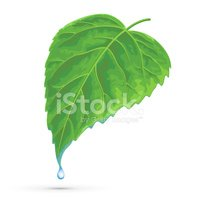 Leaf,Water,Green Color,Sing...