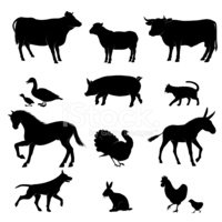 Silhouette,Cow,Animal,Pig,T...