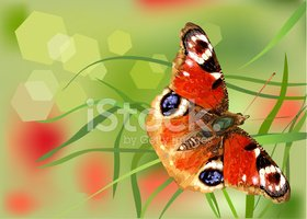 Butterfly - Insect,Flower,B...