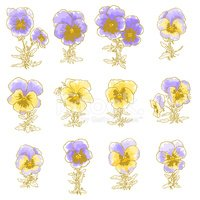 Pansy,Flower,Drawing - Art ...