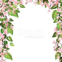 Frame,Flower,Blossom,Cherry...
