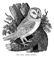 Owl,Old-fashioned,Engraved ...