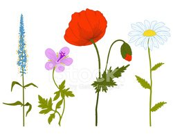 Flower,Uncultivated,Wildflo...