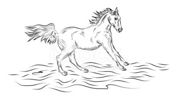 Horse,Line Art,Black And Wh...