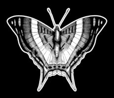 Butterfly - Insect,Ink,Grun...