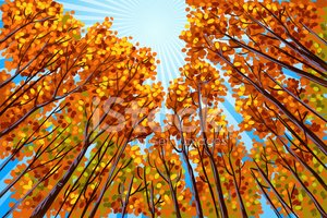 Autumn,Tree,Forest,Painting...