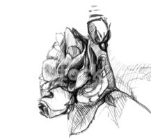 Black And White,Sketch,Rose...