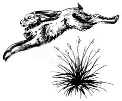 Jack Rabbit Jumping  over clump of Grass Ink Sketch