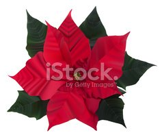 Poinsettia,Winter,Leaf,Chri...