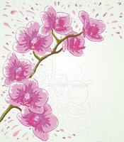 Orchid,Vector,Flower,Pink C...