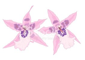 Orchid,Colors,Drawing - Act...