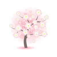 Cherry,Flower,Blossom,Sign,...
