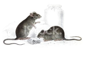 Mouse,Ilustration,Drawing -...