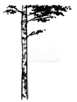 Tree,Clip Art,Birch Tree,Br...