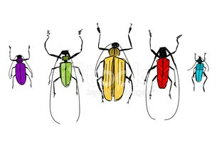 Symbol,Beetle,Insect,Comput...