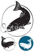 Salmon,Silhouette,Fly-fishi...