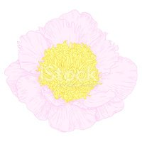 Peony,Nature,Pink Color,Cur...