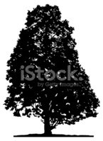 Tree,Vector,Silhouette,Land...