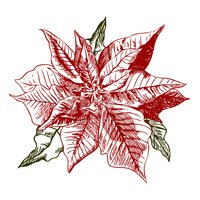 Poinsettia,Christmas,Retro ...