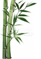 Bamboo,Leaf,Stem,Plant,New,...