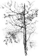Tree Trunk,Outdoors,Leaf,Br...