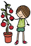 Tomato Plant,Child,Picking,...