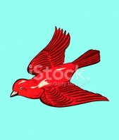 Color Image,Animal,Red,Flyi...