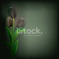 Tulip,Backgrounds,Abstract,...