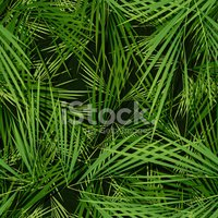 Pattern,Tropical Climate,Se...