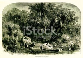 Ilustration,Agriculture,For...