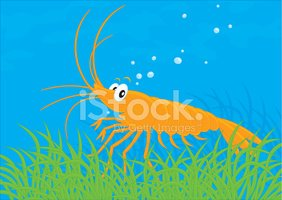 Shrimp,Cartoon,Vector,Algae...