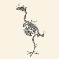 Animal Skeleton,Bird,Shape,...