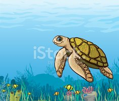 cartoon sea turtle and coral stock vectors clipart me