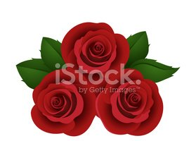Rose - Flower,White Backgro...