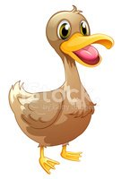 Duckling,Animal Nose,Image,...