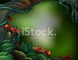 Moss,Ant,Outdoors,Wet,Image...