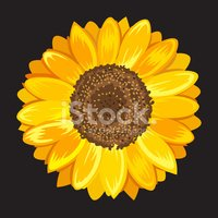 Sunflower,Yellow,Black Colo...