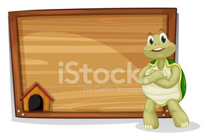Turtle,Image,Backgrounds,Co...