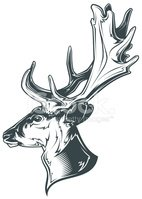 Trophy,Deer,Animal,Animal H...