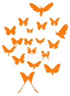 Butterfly - Insect,Animal,S...